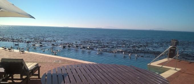 Seagull pool